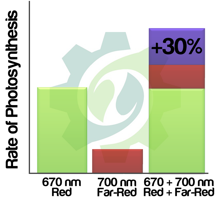 Graphical Illustration about the Emerson Effect. It shows the increase of photosynthetic rate after chloroplasts are illuminated with both Deep-Red 660nm and Far-Red 730nm.
