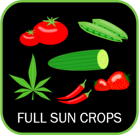 icon of full sun crops such as cucumber tomatoes cannabis peppers strawberries