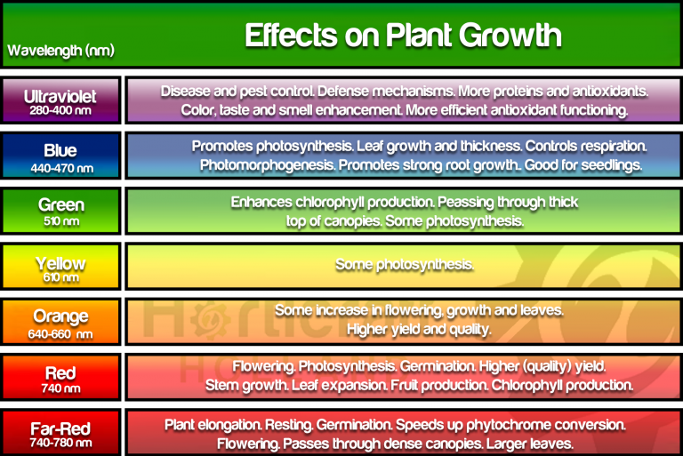 Chart of the effects of different wavelengths on plant growth. Dissecting the best light spectrum for plants