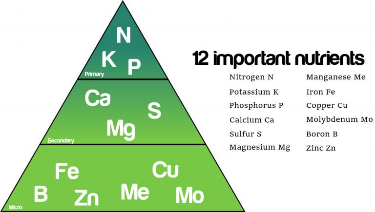 diagram of twelve important nutrients. Primary: Nitrogen, Potassium, Phosphorus. Secondary: Calcium, Sulfur, Magnesium. Micro: Manganese, Iron, Copper, Molybdenum, Boron, Zinc