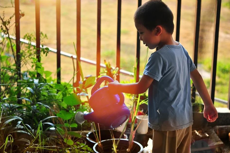 Small boy watering plants